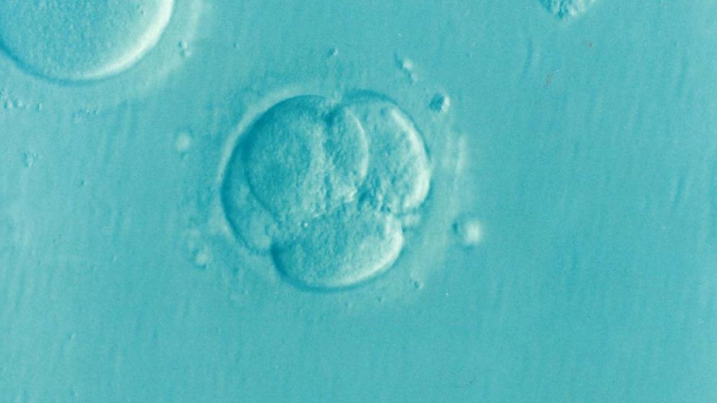 Peut-on acheter ou vendre un embryon?